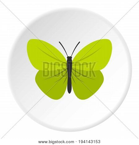 Insect butterfly with small wings icon in flat circle isolated vector illustration for web
