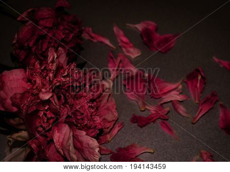 Funeral flowers. Two withered peony. Dark floral composition. Horizontal photo.