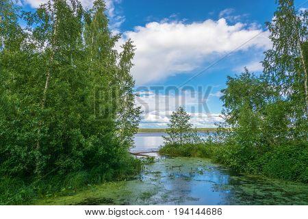 Backwater, Overgrown With Duckweed.