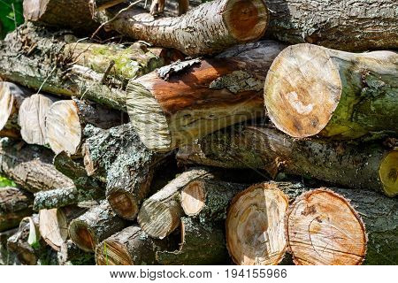 Rustic Woodpile Of Firewood Closeup. Abstract Background