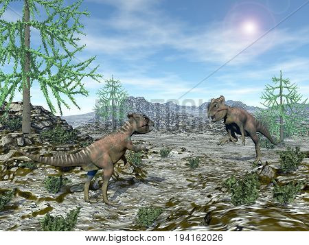 Two archaeoceratops dinosaurs looking at each other in the desert with araucaria trees by sunny day - 3D render
