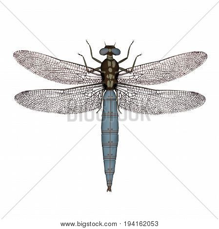 Darter dragonfly isolated in white background - 3D render