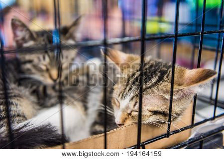 Two brown tabby kittens in cage sleeping in litter box waiting for adoption