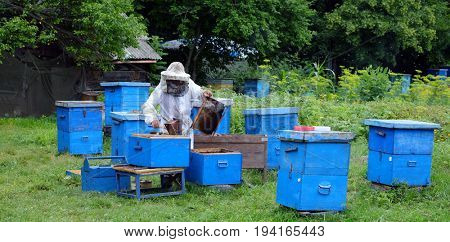 beekeeper working with bees in the hive and Honeycomb at Anisimovka, Russia