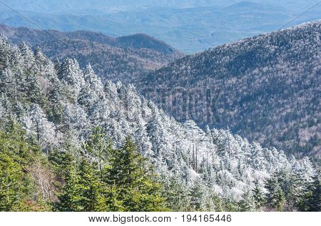 fall forest at Falaza mountain with frozen trees in russian Primorye