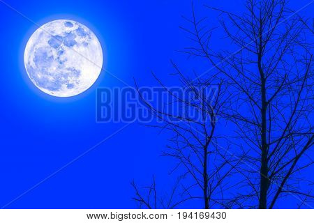 Silhouettes Of Dry Tree Against Sky And Beautiful Super Moon. Outdoor At Night.