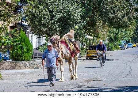 BUKHARA UZBEKISTAN - AUGUST 31: Man walking with the camel on the leash on the street at Bukhara. August 2016