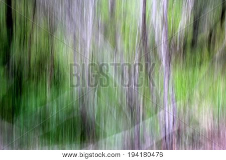 Abstract Nature Blur