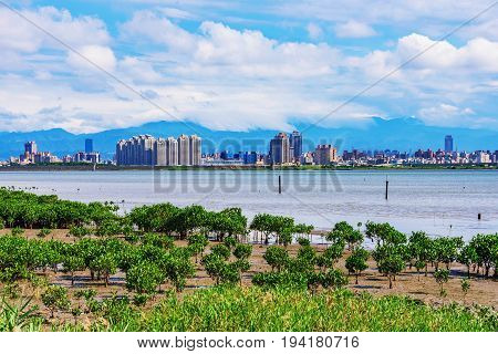 View of Taipei riverside buildings from riverside wetlands