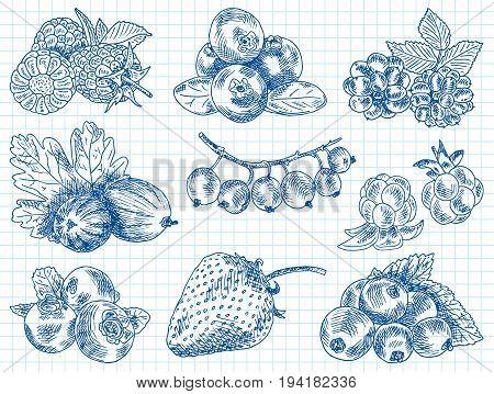 berries garden, blackberries, boysenberry, currants, dewberry, gooseberries, mulberry, raspberry, strawberry, mountain ash, blueberry, cloud berry
