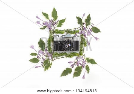 Floral frame with purple hosta flowers green leaves and succulents isolated on white background with the vintage retro camera in the middle. Flat lay top view.