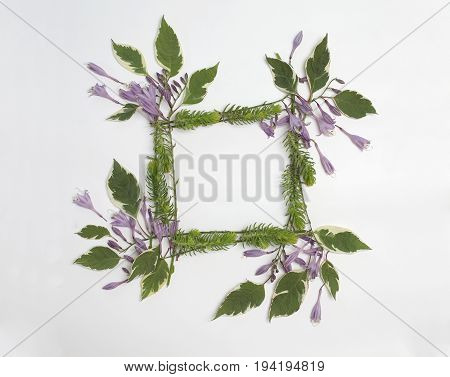 Floral square frame with purple hosta flowers green leaves and succulents isolated on white background. Flat lay top view.