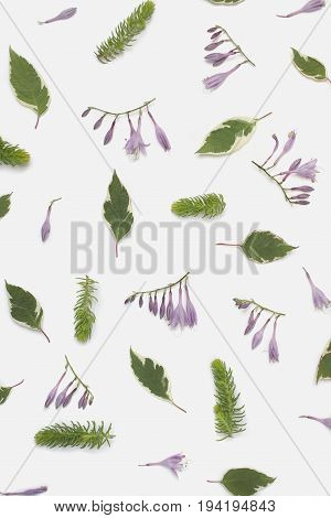 Floral pattern made of dogwood green leaves (cornus alba) hosta purple flowers and succulent branches on white background. Flat lay top view.