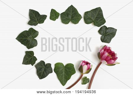 Holiday floral frame made of green ivy leaves and nymphaea waterlily purple flowers on white background. Flat lay top view.