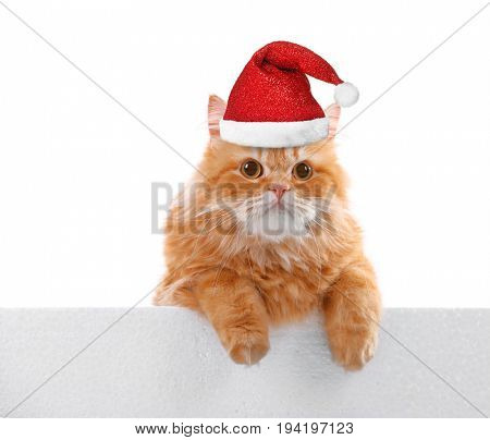 Cute cat in Santa hat on white background. Christmas and New Year celebration