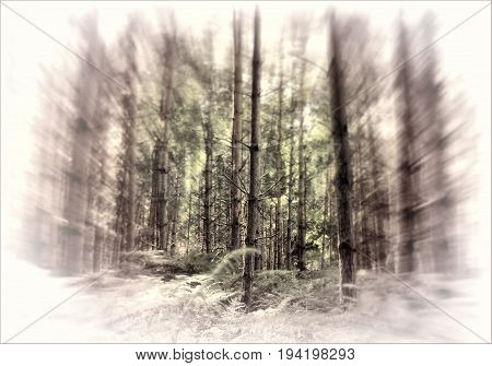 Forest woodland trees with a zoom burst effect