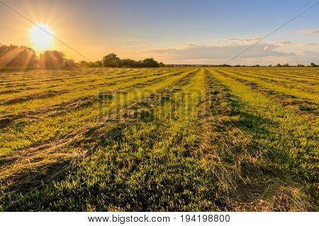 Sunset At Cultivated Land In The Countryside On A Summer.