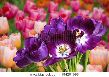 beautiful flowers in the garden close up