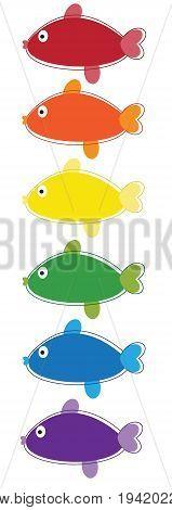Colorful Rainbow Fish on Isolated White Background