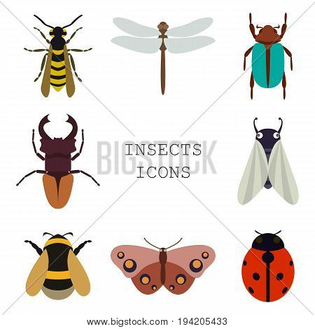 Vector illustration of insects icons color collection
