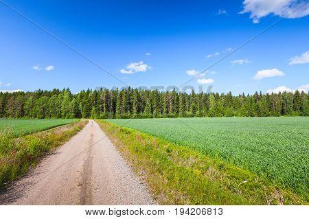 Strait Empty Rural Road Near Green Field