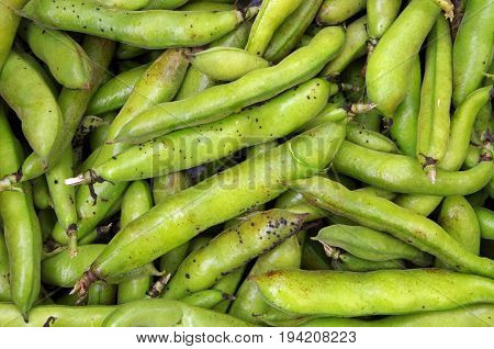 Large fava beans closeup viewed from above