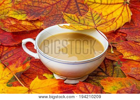 autumnal tea and fall colored leaves close up