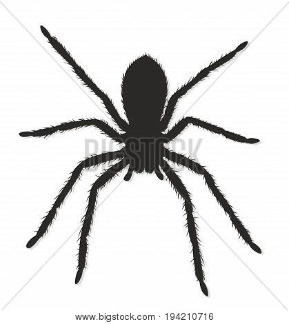 The Black silhouette of a predatory spider.