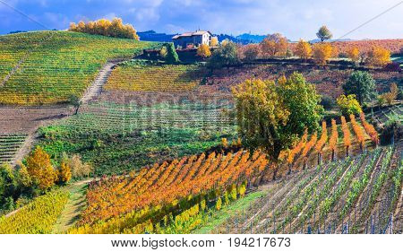 Autumn landscape . vineyards and scenic countryside of Piemonte, northen Italy