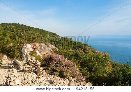 Female Hiker Collects Wild Sage On Cliff Overlooking The Sea.