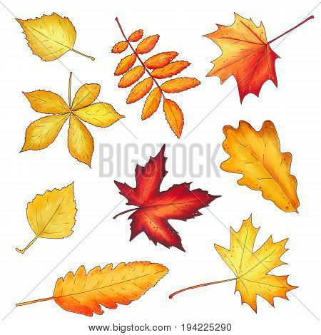 Set Of Autumn Leaves Isolated On White Background.