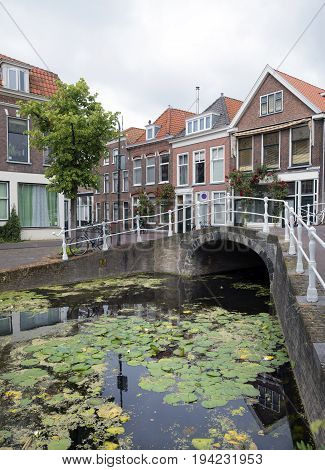 delft netherlands 30 june 2017: bridge and houses along canal full of water lilies in dutch town of delft
