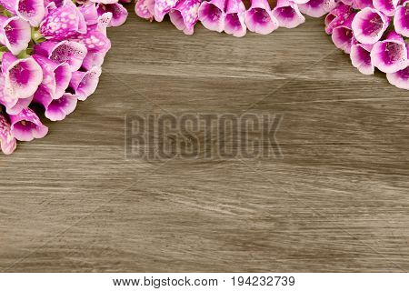 Wooden background with beautiful purple flowers Foxglove