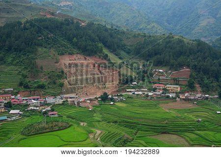 Rice Field In Northern Vietnam