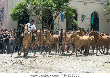 San Antonio de Areco province Buenos Aires Argentina - November 11 2012: Gaucho (South American cowboy is a resident o the South American pampas) drives a herd of horses through the town center during the Traditional Gauchos Feast (spanish - Fiesta de la
