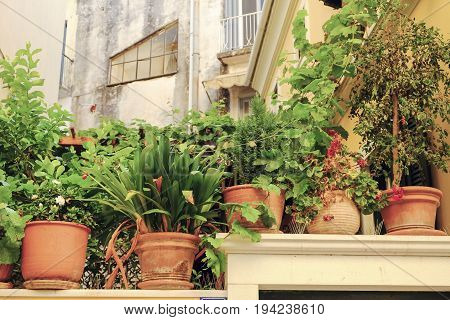 Clay pots with flowers in Corfu Street Greece.