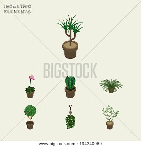 Isometric Houseplant Set Of Fern, Peyote, Blossom And Other Vector Objects. Also Includes Fern, Cactus, Blossom Elements.