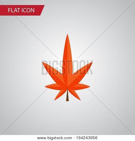 Isolated Alder Flat Icon. Aspen Vector Element Can Be Used For Aspen, Alder, Leaf Design Concept.