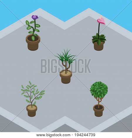 Isometric Houseplant Set Of Fern, Grower, Flower And Other Vector Objects. Also Includes Houseplant, Flowerpot, Pot Elements.