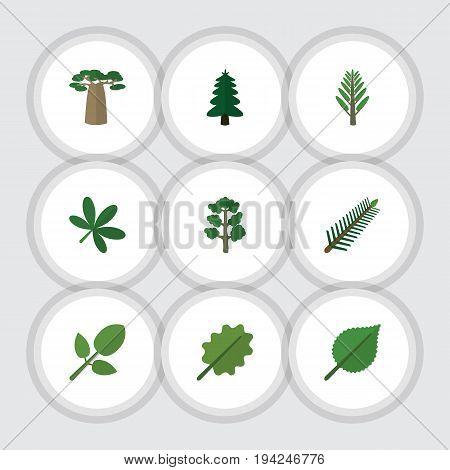 Flat Icon Natural Set Of Linden, Alder, Baobab And Other Vector Objects. Also Includes Alder, Foliage, Oak Elements.