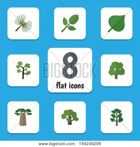 Flat Icon Nature Set Of Hickory, Decoration Tree, Baobab And Other Vector Objects. Also Includes Leaf, Spruce, Park Elements.
