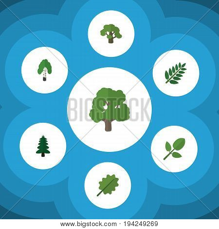Flat Icon Ecology Set Of Acacia Leaf, Tree, Park And Other Vector Objects. Also Includes Hickory, Tree, Forest Elements.