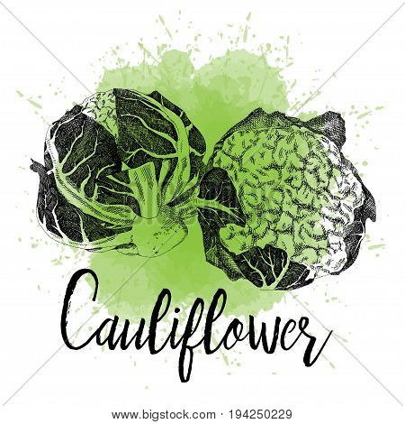 Vector Illustration Of Cauliflower Pictured In Hand Drawn Graphi