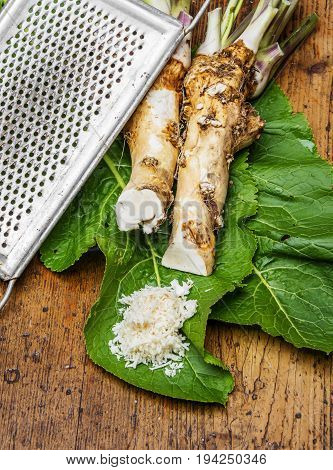 a horseradish - still life - close up