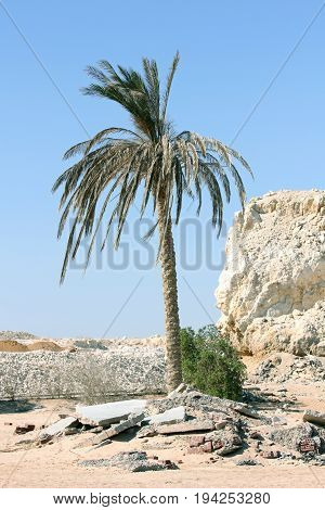 Palm tree in the sand desert landscape