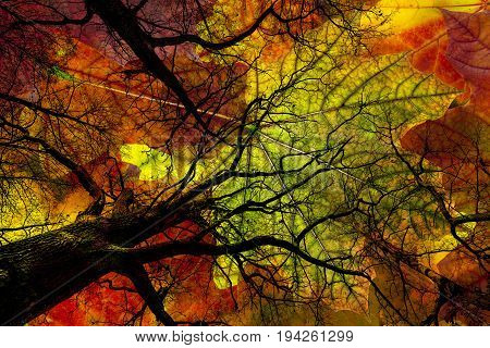 fall trees and colored leaves - autumnal picture