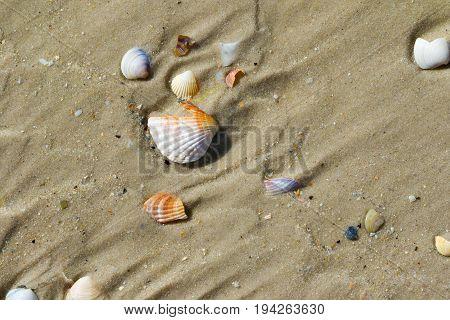 Brocken Seashells On Wet Sand Beach At Hot Sun Summer Day