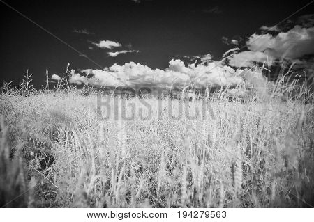 infrared photography - summer field and cloudy sky