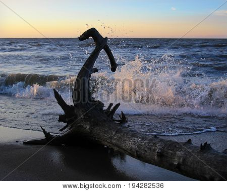 driftwood on the beach while wash to the shore