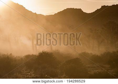 Thick Dusty Fog Through Joshua Tree